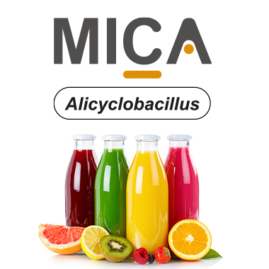 Detection of bacteria ACB in fruit juice